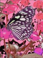Schmetterling als positiver Anker